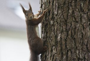 squirrel-2877609_640