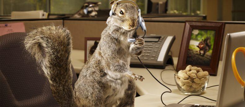 service-client-squirrel